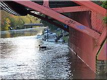 SK5803 : Flooding under Mill Lane Bridge No 110 by Mat Fascione