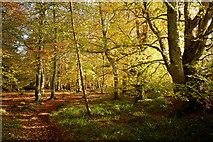 NH5966 : Autumn in Evanton Community Wood by Julian Paren
