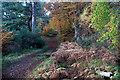 NH4943 : Track towards Black Bridge in Balblair Wood by Julian Paren