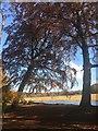 SK2679 : The lake at Longshaw by Graham Hogg
