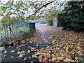 ST3090 : Fallen leaves on a path in Malpas, Newport by Jaggery