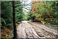 NZ0631 : Mud and serious erosion on forest road by Trevor Littlewood