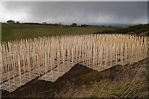 NT0442 : Pallets on Cocklaw Hill by Richard Webb
