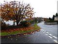 H4672 : Fallen leaves, Georgian Villas, Omagh by Kenneth  Allen