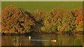 SX7343 : Kayak, Kingsbridge Estuary by Derek Harper