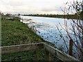 TL3974 : Near Earith Bridge - The Ouse Washes by Richard Humphrey