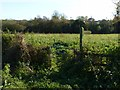 SK6843 : Bridleway gate alongside Trent Lane by Alan Murray-Rust