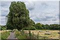 TQ1556 : Path to Fetcham Mill Pond by Ian Capper