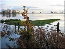 TL4279 : Oak tree at Sutton Gault - The Ouse Washes by Richard Humphrey