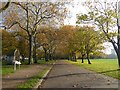 TQ3684 : Autumn colours in Victoria Park by Marathon