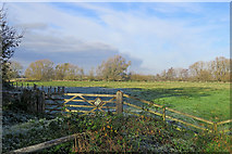 TL4352 : In Trumpington Meadows Country Park in autumn by John Sutton