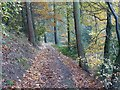 SO7642 : Path through autumn beeches by Philip Halling