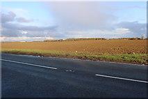 TL2760 : Field by St Ives Road, Eltisley by David Howard