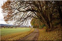 NH5144 : Estate road to Groam of Annat by Julian Paren