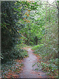 TQ1293 : Path in woodland north of Carpenders Park Cemetery by Mike Quinn