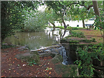TQ1293 : Pond by Carpenders Park Cemetery by Mike Quinn