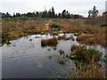 NH7344 : Wet underfoot conditions, Culloden Battlefield by Julian Paren