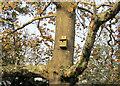 SX9265 : Birdbox, Tessier Gardens by Derek Harper