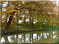 SP7290 : Trees along the Market Harborough Arm of the Grand Union Canal by Mat Fascione