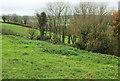 ST5466 : Trees below Castle Farm by Derek Harper