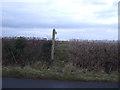 NX9922 : Footpath towards the England Coastal Path by JThomas