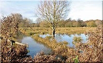 TG2105 : Tree in flooded pasture on Marston Marsh by Evelyn Simak