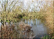 TG2105 : High water in the River Yare by Evelyn Simak