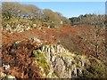 SH7654 : Wooded hillside, Cwmcelyn by Jonathan Wilkins