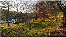 SK5605 : Trees along Groby Road in Leicester by Mat Fascione