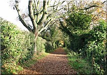 TG2105 : View east on Marston Lane by Evelyn Simak