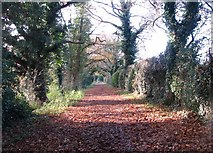 TG2105 : A carpet of autumn leaves on Marston Lane by Evelyn Simak