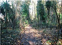 TG2105 : Path past ivy-clad trees in Danby Wood by Evelyn Simak