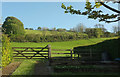 SS6229 : Sheep pasture, Swimbridge by Derek Harper