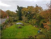 SE6250 : Ron Weir's Garden by DS Pugh