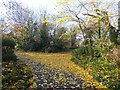 NZ3767 : Leaf fall in South Marine Park by Oliver Dixon
