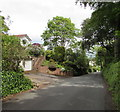 SY1187 : Leafy Cotmaton Road, Sidmouth by Jaggery