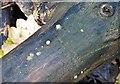 TG2105 : Dacrymyces chrysospermus by Evelyn Simak