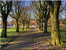 SD7807 : Tree-lined Path to Lych Gate, St Thomas' Church by David Dixon