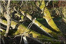 NJ1941 : Three Trunks by Anne Burgess