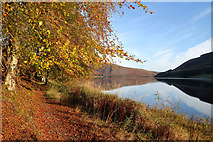 NT2320 : Autumn colours by St Mary's Loch by Walter Baxter