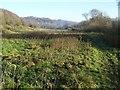 SJ6404 : Pastureland beside the River Severn by Philip Halling