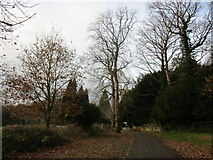 SK5451 : Approaching St. James' church, Papplewick by Jonathan Thacker