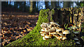 J5080 : Fungus, Bangor by Rossographer