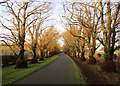 NS8141 : The Lime Avenue, Kerse Estate by Alan O'Dowd