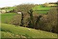 ST7470 : Sheep, Manor Farm by Derek Harper