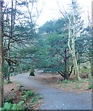 J3532 : The Ivy Bridge end of the River Drive at Tollymore Park by Eric Jones