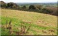 ST7372 : Grassland on Tog Hill by Derek Harper