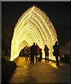 NT2475 : Christmas at the Botanics - Cathedral of Light by Jim Barton