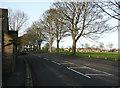 SE1423 : Trees alongside Halifax Road, Brighouse by Humphrey Bolton