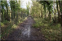 TR1034 : Royal Military Canal Path towards West Hythe Road by Ian S